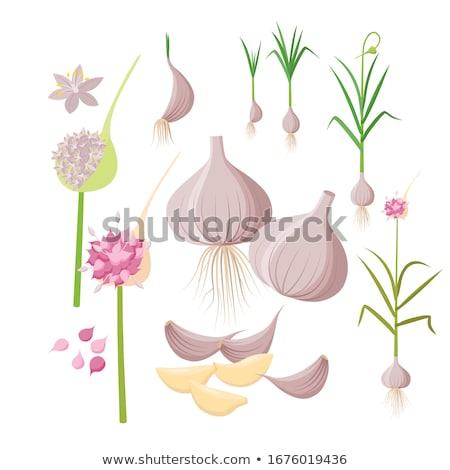 Sarımsak yaprak beyaz pişirme sebze ampul Stok fotoğraf © bdspn