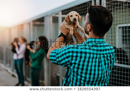 Women friends playing with dogs in the animal shelter Stock photo © Kzenon
