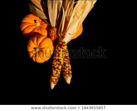 Indian corn cobs with fall ornamental gourds and a pumpkin Stock photo © sarahdoow