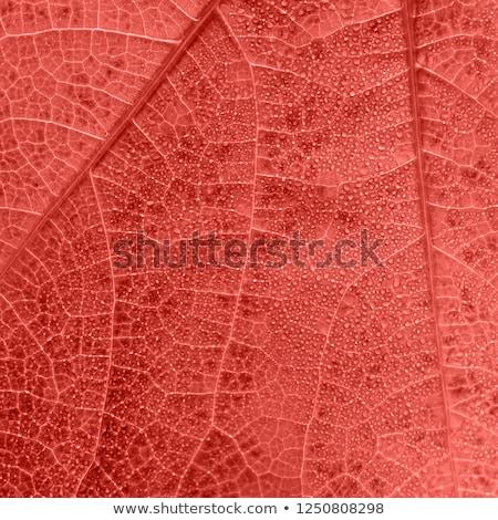秋 葉 サンゴ カラフル ストックフォト © artjazz