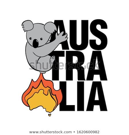 Burning Australia fleeing koala - Support wildlife Stock photo © Zsuskaa