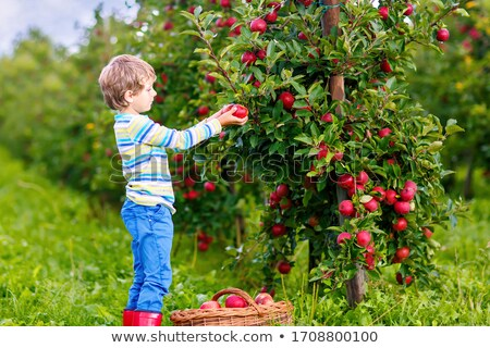 Cute little preschooler with apple on beautiful autumn Stock photo © Lopolo