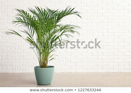 Verde planta vegetación olla negro Foto stock © robuart