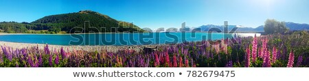 Új-Zéland tavasz természet legelő zöld tájkép Stock fotó © Maridav