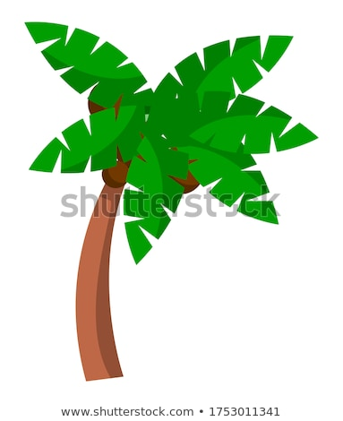 Coconut palm tree on a white background. Bent palm tree with large green leaves cartoon style Stock photo © robuart