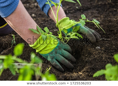 Gardening Glove on green leaf stock photo © sielemann