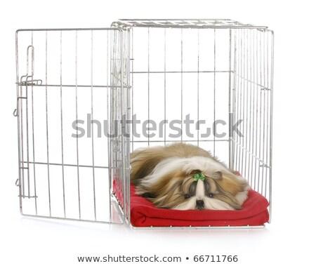 puppy shihtzu in cage stock photo © cynoclub
