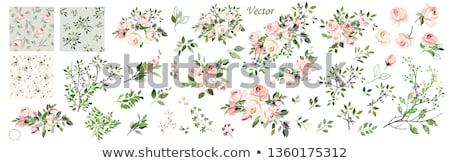 establecer · boda · banners · ornamento · ilustración - foto stock © elak