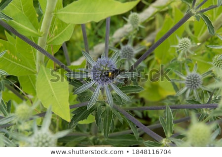 mammoth wasp in green nature Stock photo © sweetcrisis