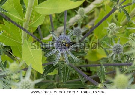 Wesp groene natuur tuin achtergrond bee Stockfoto © sweetcrisis