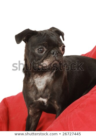 Foto stock: Fungus Infection On Dog