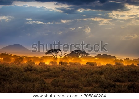 Wildlife Africa background Stock photo © dagadu