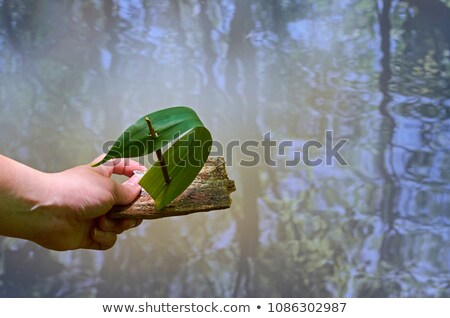 Tree Bark Boat Stock photo © nailiaschwarz