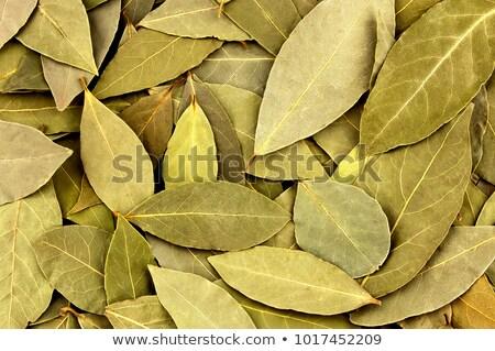 Babér levelek száraz barna fából készült levél Stock fotó © lidante
