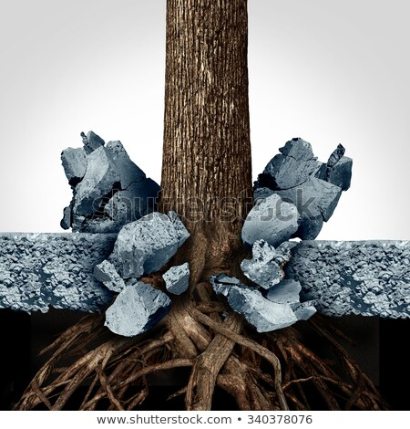 strong business roots stock photo © lightsource