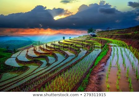 fazenda · campo · irrigação · moderno · água · recentemente - foto stock © ferdie2551