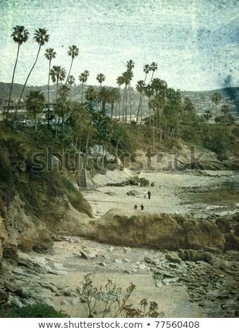 Stromy morza vintage Fotografia starych Zdjęcia stock © sirylok
