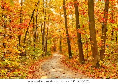 pathway through the autumn forest stock photo © leungchopan