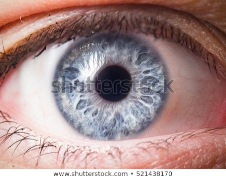 kahverengi · göz · genç · kadın · odak · iris - stok fotoğraf © w20er