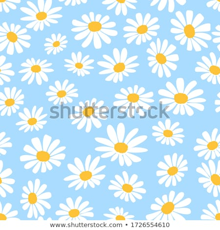 Blanche Daisy belle vert prairie accent Photo stock © iko