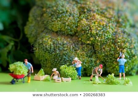 Agricultores colheita gigante couve-flor miniatura em pé Foto stock © Kirill_M