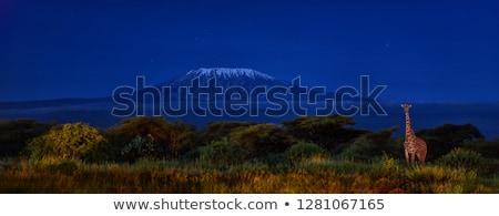 Majestic Glacier National Park Stock photo © pictureguy