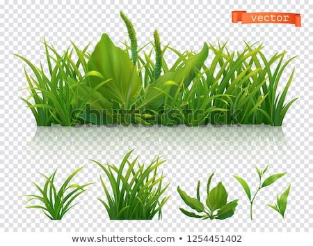 лезвия трава художественный солнце природы Сток-фото © AlessandroZocc