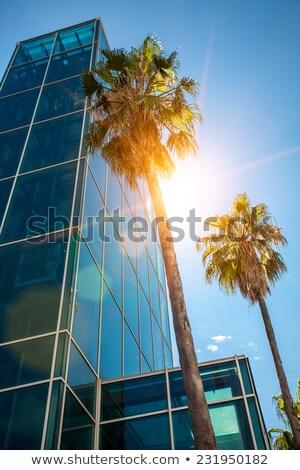 palm tree grows downtown Stock photo © meinzahn