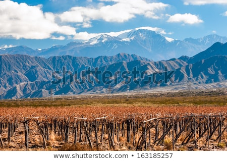Volcano Aconcagua and Vineyard. Aconcagua is the highest mountai Stock photo © xura
