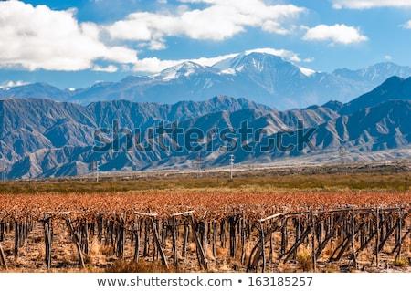 Сток-фото: Volcano Aconcagua And Vineyard Aconcagua Is The Highest Mountai