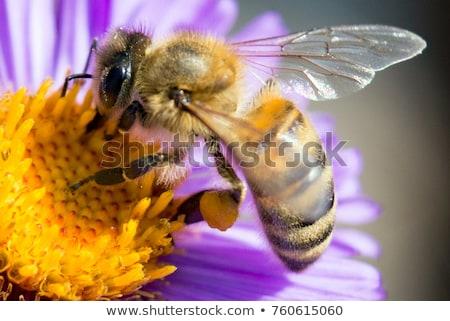 Makró méh rózsaszín vadvirág rovar néz Stock fotó © compuinfoto