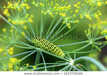 Dotted caterpillar Stock photo © Soleil