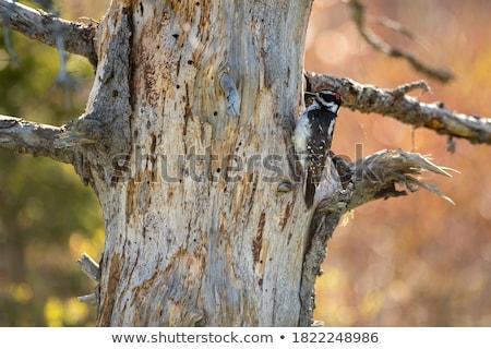 Küçük ahşap dizayn kuş eğlence siyah Stok fotoğraf © Norberthos