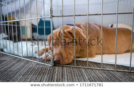 Stock photo: Puppy in a pen