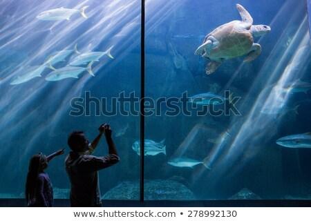 Férfi lánygyermek elvesz képek tenger teknősök Stock fotó © wavebreak_media