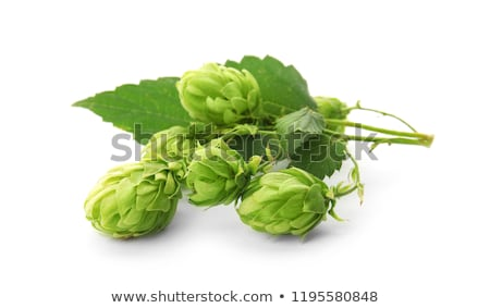 hops humulus stock photo © maxsol7
