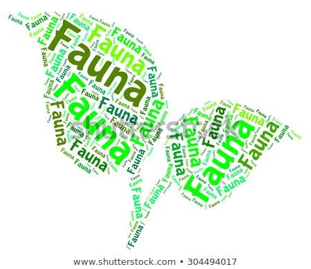 Fauna palavra animal reino vida criaturas Foto stock © stuartmiles