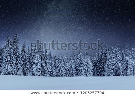 Zdjęcia stock: Zimą · lasu · noc · stylizowany · ilustracja · bezszwowy