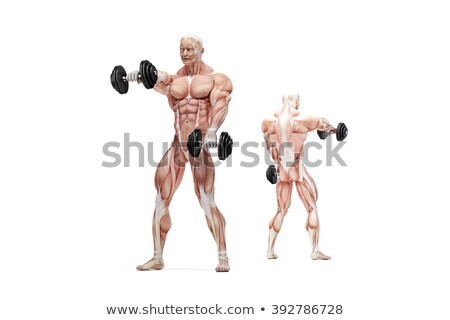 front raises shoulders exercise anatomical illustration isolated clipping path stock photo © kirill_m