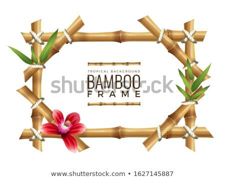 bambou · cadre · herbe · bois · feuille · jardin - photo stock © winner