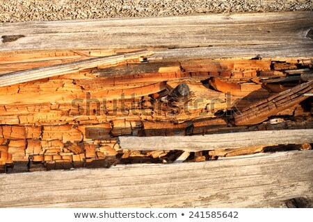 spruce wood in decay Stock photo © taviphoto