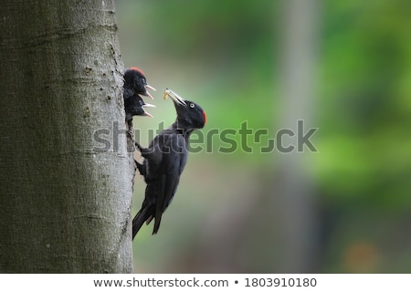Bird feeding the chick with worm Stock photo © bluering