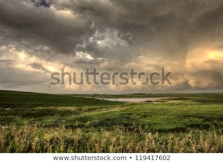 Stock fotó: Viharfelhők · Saskatchewan · égbolt · fa · felhők · eső