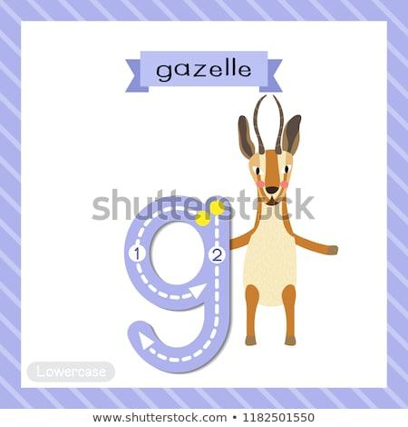 Flashcard letter G is for gazelle Stock photo © bluering