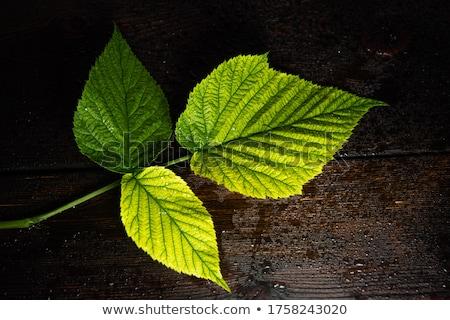 新鮮な ラズベリー 葉 木製 表 工場 ストックフォト © yelenayemchuk