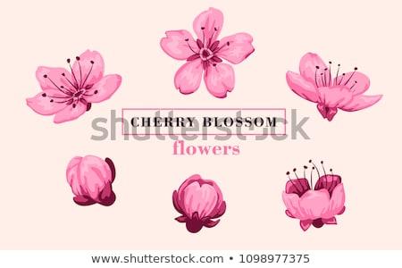 Flor de cereja pêssego flores padrão primavera abstrato Foto stock © Krisdog