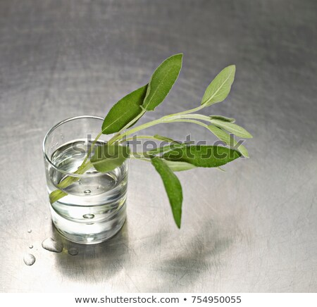 A water glass with a sprig of sage in it Stock photo © IS2