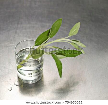 Water glas salie voedsel Stockfoto © IS2