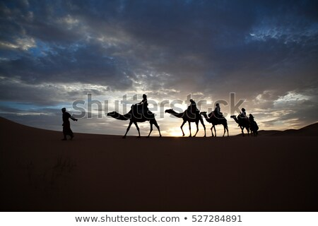 Silhouette Camels in Desert Scene Stock photo © bluering