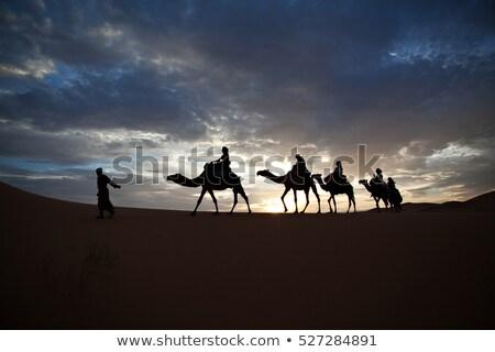 Silueta camellos desierto escena ilustración diseno Foto stock © bluering